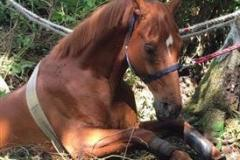 Horse rescued from ditch in Wilmslow