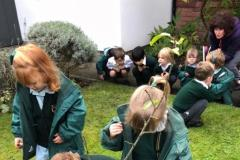 Schoolchildren plant crocuses to help Rotary's polio campaign spring to mind