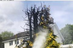 Blowtorch used to kill weeds causes tree fire