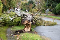 Reader's Photo: Casualty of the high winds in Wilmslow