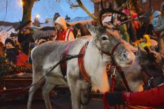 Real reindeer parade proves quite 'contentious'