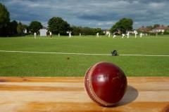 Cricket: Squirrels sit top of the tree