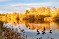 Reader's Photo: Black Lake at Lindow Common
