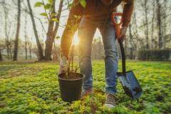 Council announces tree planting to reduce carbon footprint