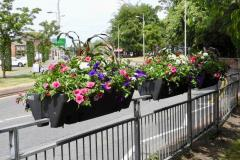 In Bloom team, with your help, bid to keep the town vibrant