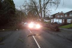 Driver escapes with minor injuries after tree crushes his van