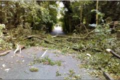 Fallen tree blocks Stanneylands Road