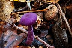 Reader's Photo: An amethyst deceiver
