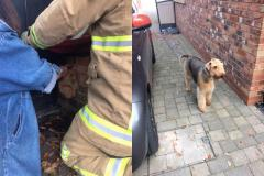 Dog rescued after getting head stuck in a gate