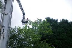 Cat rescued after getting stuck 60ft up a tree