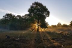 Reader's Photo: Lindow Common sunrise