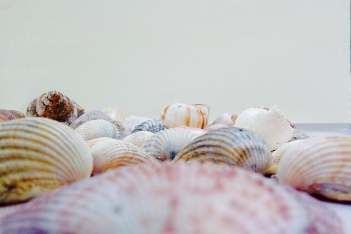 Exploring Composition with Sea Shells